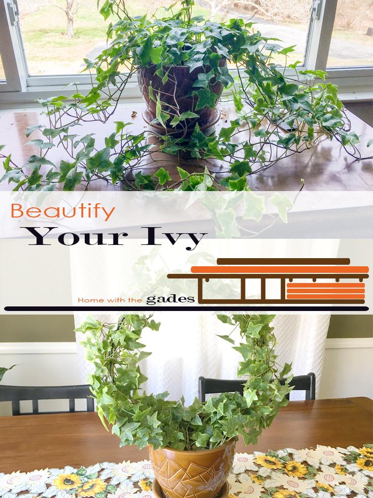 ivy plant hoop trelis cirle